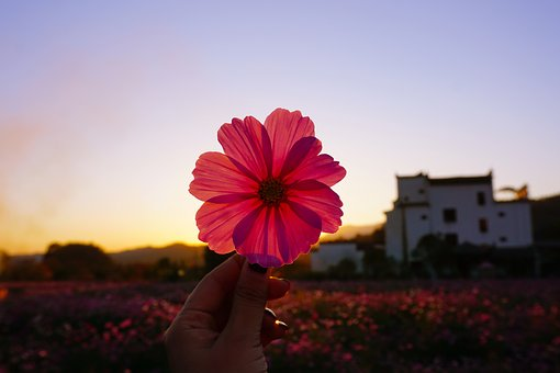 Hongcun Village, Sunset, Grain, Gesanghua, Flowers