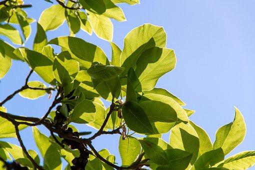 Foliage, Sky, Green, Blue, Branches, Bush, Spring