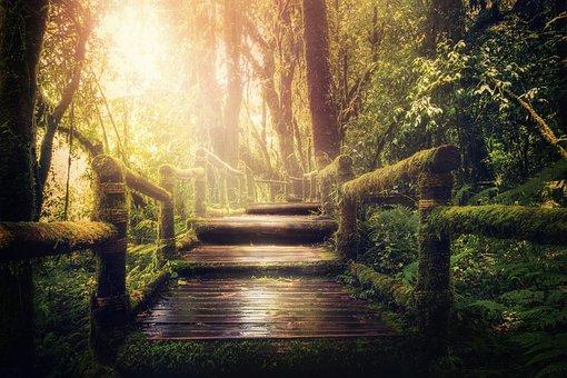 Jungle, Away, Trees, Background Image, Travel