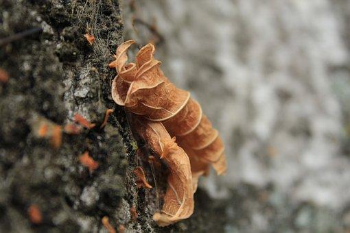 Texture, Leaf, Nature, Leaves, Color, Autumn, Tree