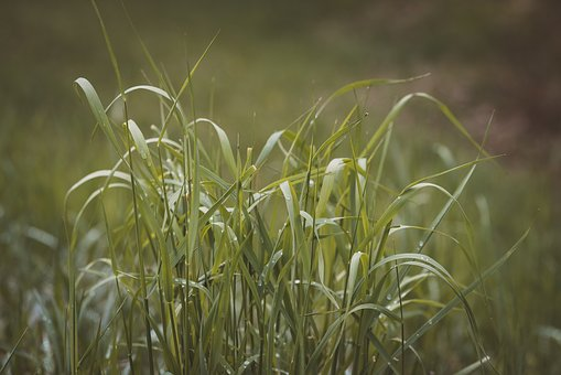 Grass, Green, Meadow, Nature, Of Course, Close Up, Grow