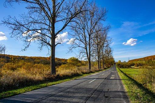 Hungary, Trizs, Nature, Wood, Road, Autumn, Landscape