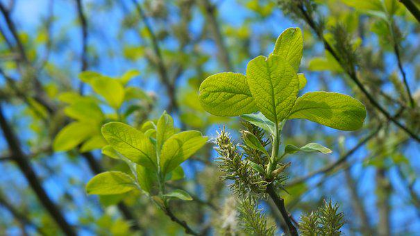 Nature, Plants, Young, Leaflet, Twigs, The Basis Of