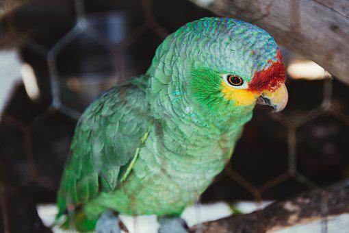 Parrot, Bird, Colorful, Nature, Animal, Feather