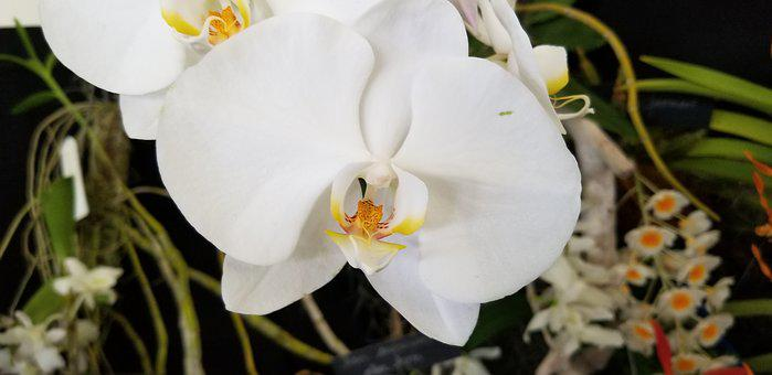 Orchid, Natural, Real, Nature, Bloom, Flowers, Plant