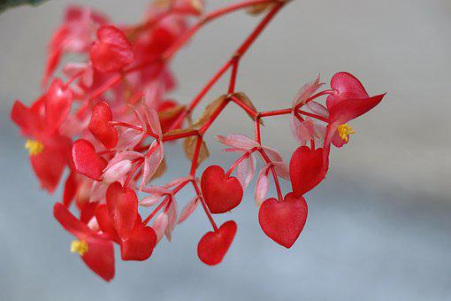 Leaves, Heart, Red, Love, Tree, Flowers, Happiness