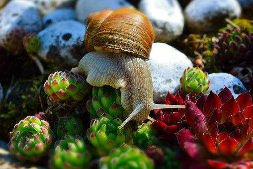 Snail, Wirbellos, Mollusk, Shell, Close Up, Useful