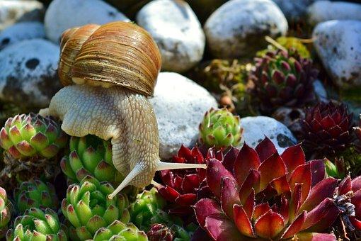 Snail, Mollusk, Crawl, Slowly, Garden