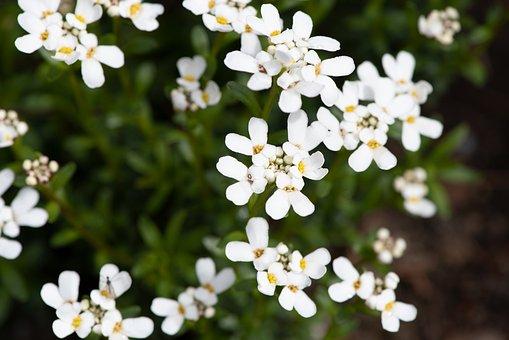 Flowers, White, Garden, In The Garden, Spring