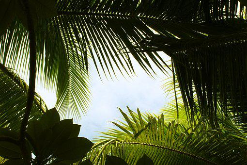 Tropical, Green, Summer, Leaf, Exotic, The Leaves