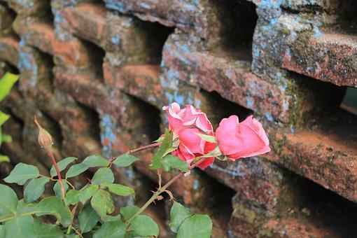 Rosa, Bricks, Green, Brick, Flower, Texture, Flowers