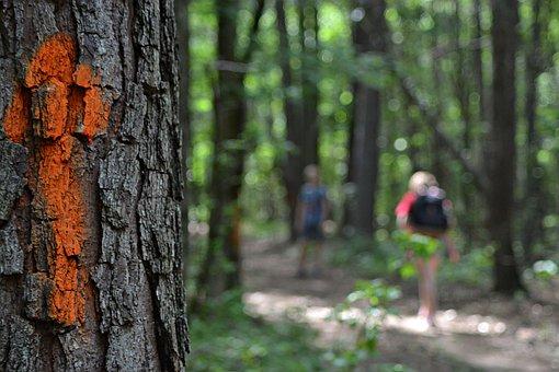 Arrow, Tree, Wood, Nature, Hike, Hiking, Trails, Forest