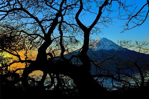 Fujiyama, Volcano, Mountain, Tree, Kahl, Sunrise