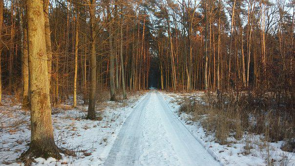 Forest, Way, Winter, Road, Landscape, Tree, The Path