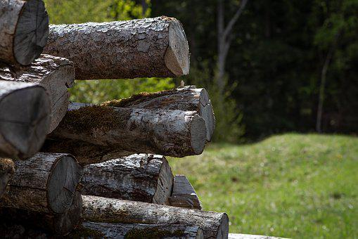 Wood, Wood Trunks, Tree Trunks, Nature, Firewood
