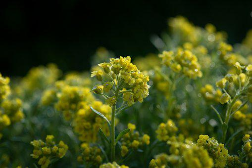 Flowers, Yellow, Garden, Nature, Flora, Bloom, Spring