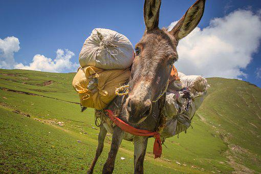 Donkey, Donkey With Weight, A Donkey Carrying Luggage