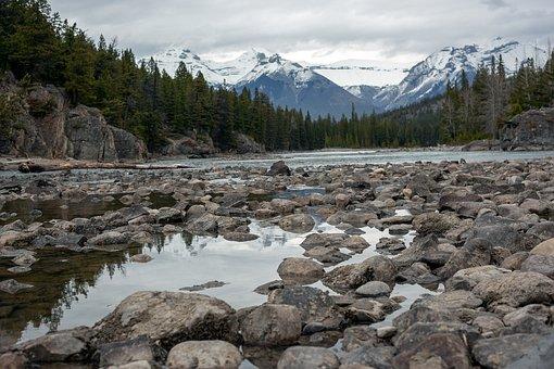 River, Banff, Canada, Forest, Landscape, Nature, Travel