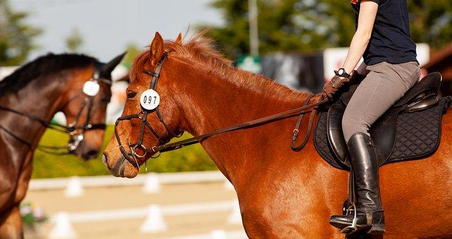 Horse, Dressage, Bay, Chestnut, Competition, Saddle
