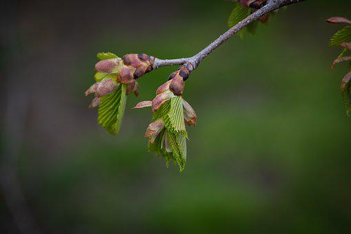 Branch, Leaves, Green, Spring, Nature, Hanging Elm