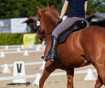 Horse, Dressage, Bay, Chestnut, Competition, Saddle