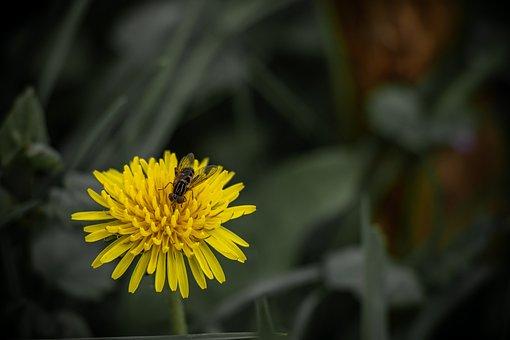 Bee, Dandelion, Flower, Insect, Pollen, Spring, Bloom