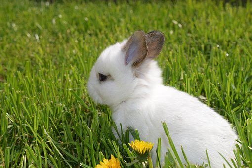 Rabbit Ears, Climate Protection, Easter Pictures