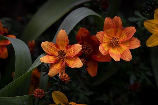 Flowers, Orange, Garden, Nature, Flora, Spring