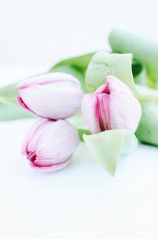 Mother's Day, Tulips, Flowers, Plant, Flora, Purple