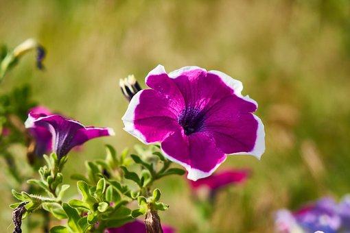 Flower, Spring, Summer, Background, Hot, Season, Plant