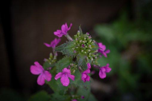 Flowers, Pink, Flower, Wild Flower, Pointed Flower