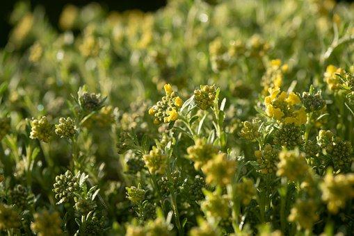 Flowers, Yellow, Garden, Spring, Bloom, Nature, Flora