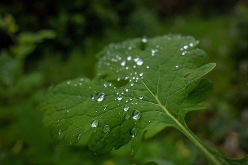 Leaf, Drop, Water, Green, Nature, Wet, Rain, Droplets