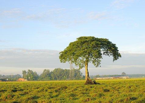 Tree, Field, Landscape, Sky, Countryside, Sunrise