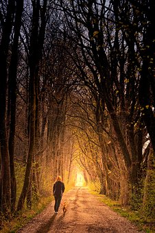Away, Light, Person, Dog, Light Beam, Forest, Avenue