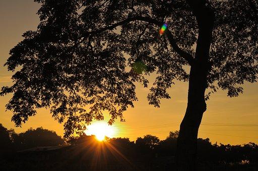 Tree, Shadow, Landscape, Light, Sunrise, Orange, Nature