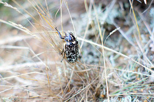 Bug, Nature, Grass, Forest, Insect, Beetle, Macro, Wild