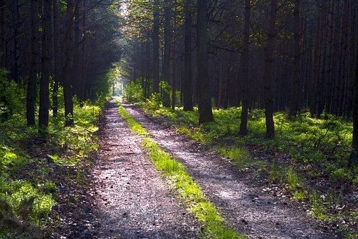 Light, Luminously, The Path, Morning, Tree, Landscape
