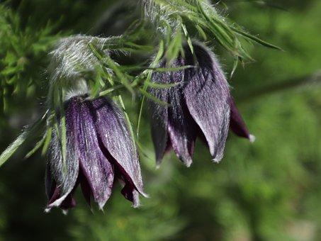 Flowers, Spring, Nature, Purple, Bloom, Blooming