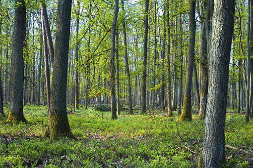 Tree, Spring, Floe, Landscape, Green, Bud, Nature