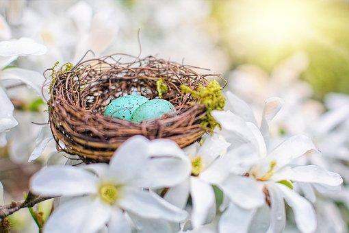 Nest, Robin Eggs, Eggs, Spring, Nature, Easter