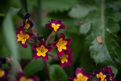 Flowers, Garden, In The Garden, Spring, Nature, Flora