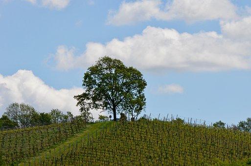 Vineyard, Tree, Landscape, Spring, Nature, Green