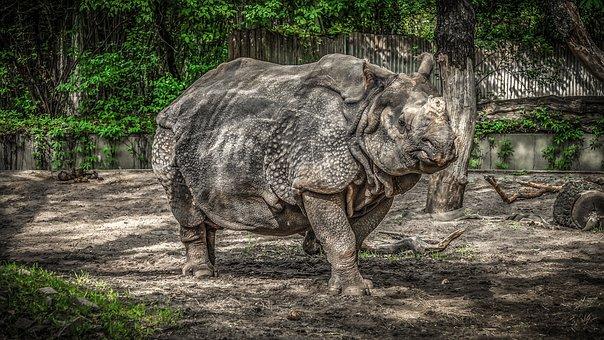 Rhino, Panzer, Pachyderm, Big Game, Skin, Zoo, Animal