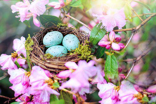Nest, Robin Nest, Pink, Spring, Nature, Eggs, Easter