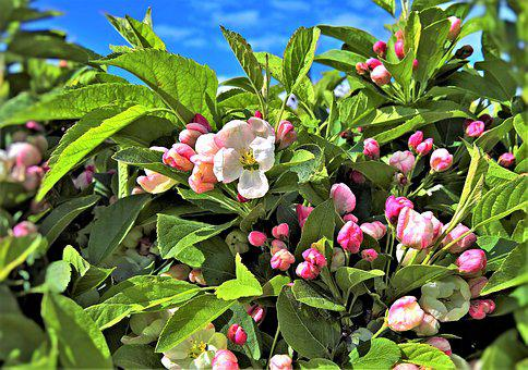 Plant, Cranesbill, Hedge Plant