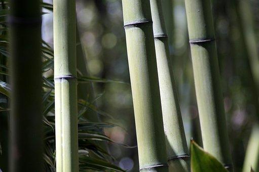 Bamboo, Forest, Strains, Grass, Plant, Vegetation