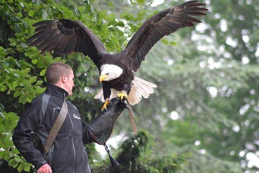 Eagle, Flight, Raptor, Bird, Pen, Predator, Power, Sky