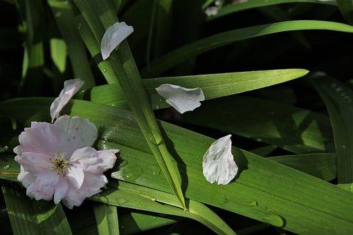 Delicate, Green, Bloom, Drops, The Petals, Rain, Rainy