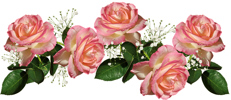 Roses, Pink, Leaves, Flowers, Perfume, Arrangement